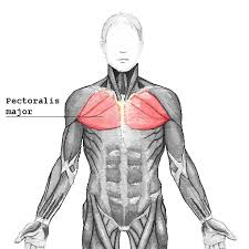 Chest muscles creating shoulder pain