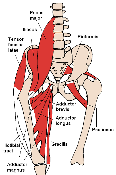 Diagram of the abdominal area and key muscles