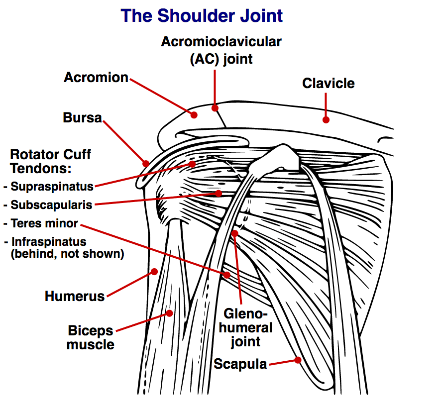 Your Complete Guide To Exercises for Shoulder Pain